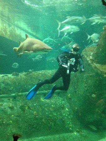 North Carolina Aquarium at Pine Knoll Shores: Divers in the Sunken Ship Exhibit