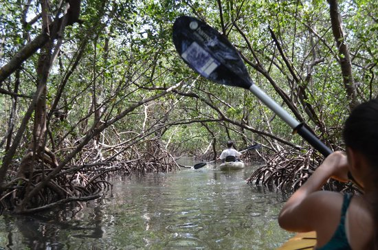 Liquid Blue Outfitters : Mangrove Tunnels