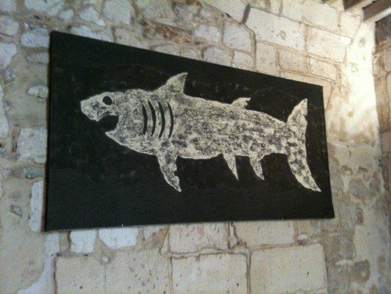 Fad'oli : grand requin blanc