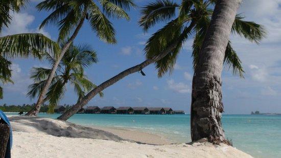 Shangri-La's Villingili Resort and Spa Maldives : Beach next to pool