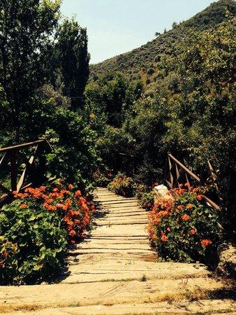 Sirince'm Sakli Vadi: Saklı Vadı ın bloom-Herbs and flora and forna om abundance- perfectıon! A place of beauty to st