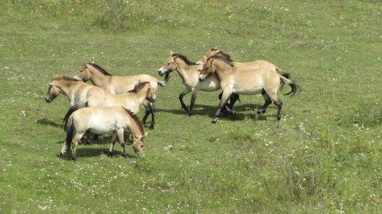 Urwildpferde im Naturschutzgebiet Tennenloher Forst