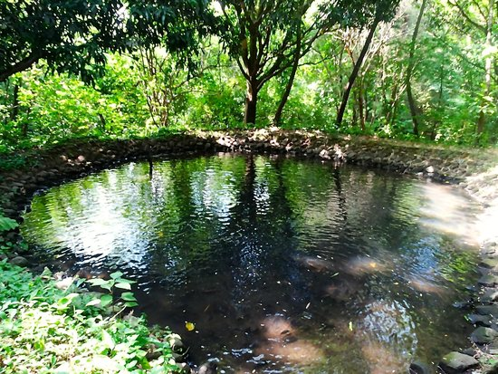 Amatierra Retreat and Wellness Center : Beautiful pond in the forest on Amatierra property