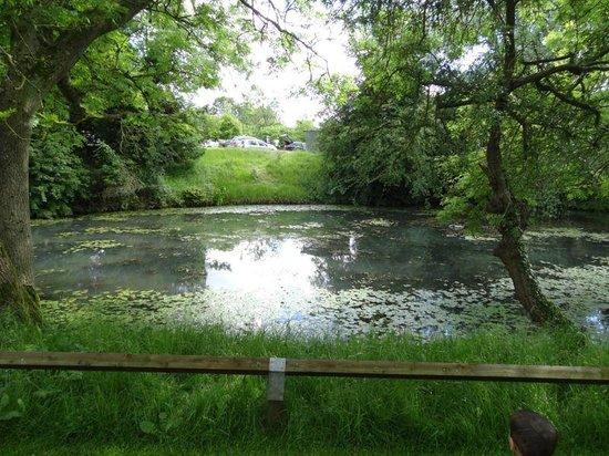 De Vere Staverton Estate: Pond