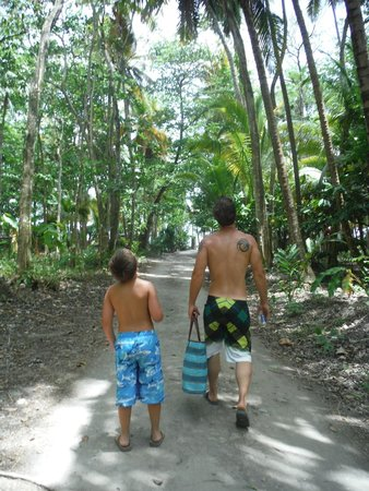 Anse Chastanet : exploring the rainforest