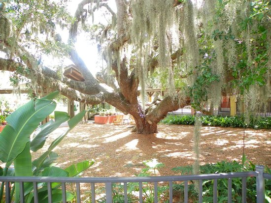 Legacy Vacation Resorts-Palm Coast: Big live oak
