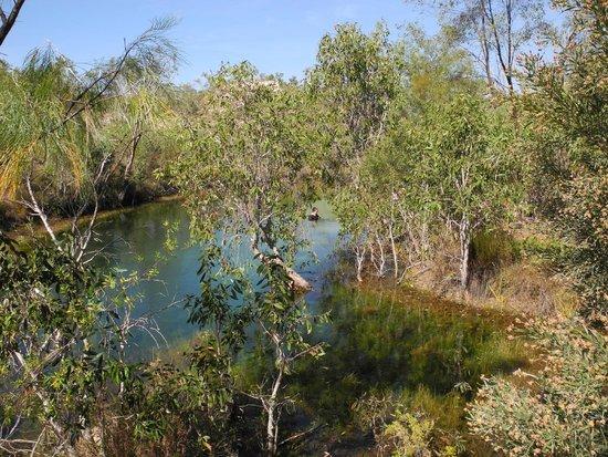Lorella Springs Wilderness Park: one of the cooler swim holes