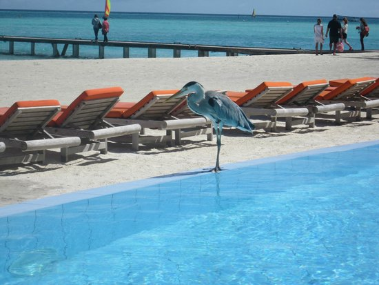 Club Med Kani : vu de la piscine