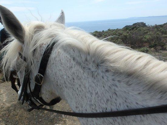 Panorama Trails: my loyal horse Carinyoso