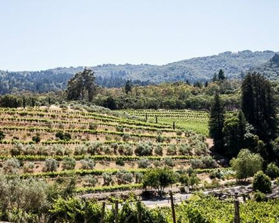 Benziger Family Winery : View of the property