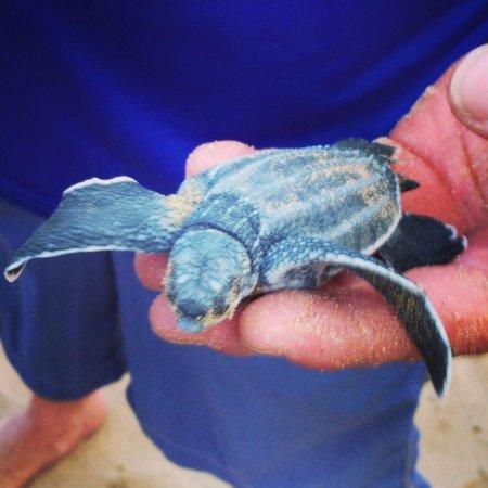 The St. Regis Bahia Beach Resort: Bucket List check