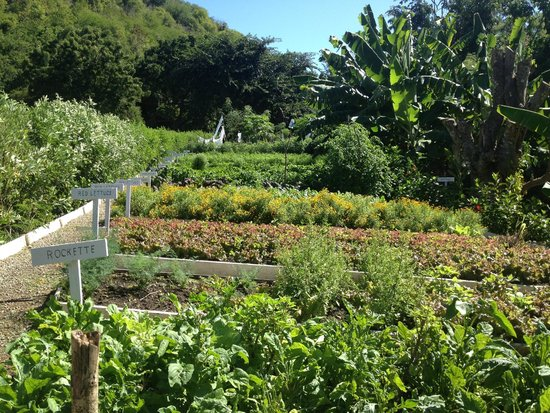 The Inn at English Harbour: On site garden