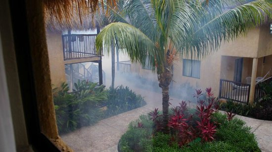 Allegro Cozumel : fumigating for mosquitos