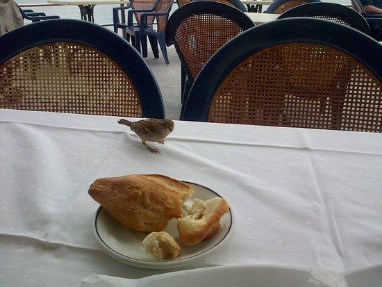 Restaurante Balneario La Magdalena: Pajarillo deseando mi pan en la terraza