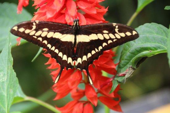 Mariposas de Mindo - Butterfly Garden: Butterfly