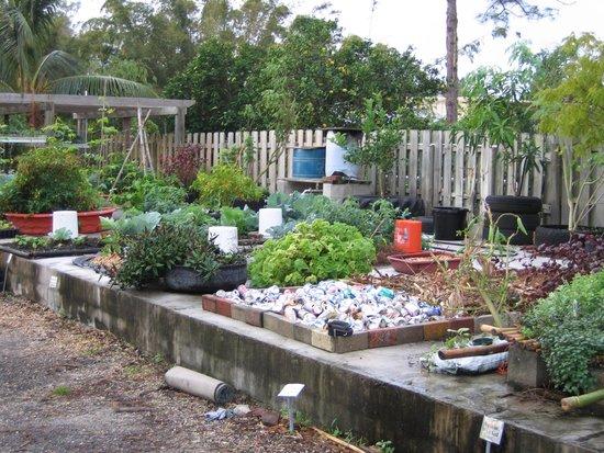 ECHO Global Farm Tours: Urban Gardening Examples