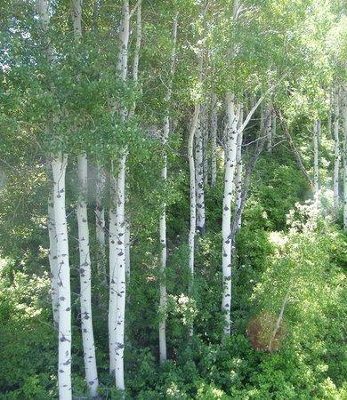 Park City Utah Summer Attractions: Aspen trees