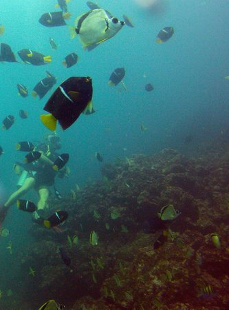 Aquacenter Diving: King Angelfish