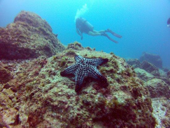 "Aquacenter Diving: Starfish and ""Risky"""