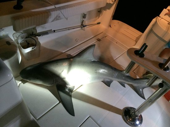 Sharkslayer Fishing Charters: Heather Grizzaffe's BIG Bull Shark June 15 2014