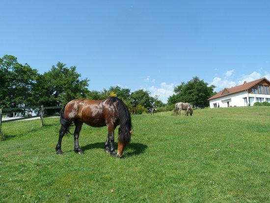 Le Clos des Chenaies : De magnifiques chevaux, très doux pour les débutants