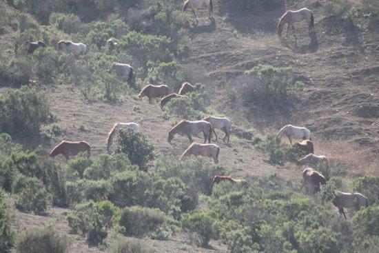 Return to Freedom, American Wild Horse Sanctuary: Peace