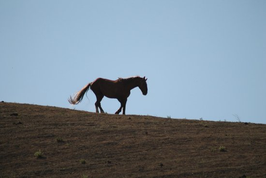 Return to Freedom, American Wild Horse Sanctuary : Beautiful ridgeline