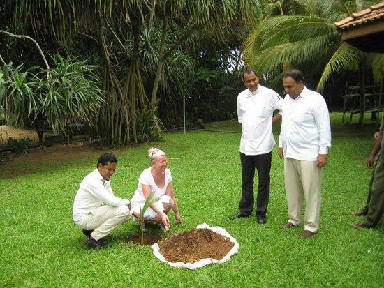 Vivanta by Taj - Bentota : Tree planting