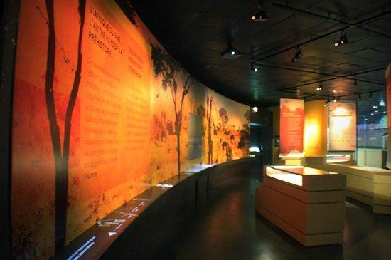 Musée d'histoire Naturelle : Зал саванна
