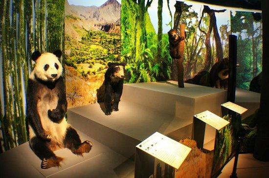 Museum of Natural History: Временная выставка Медведи