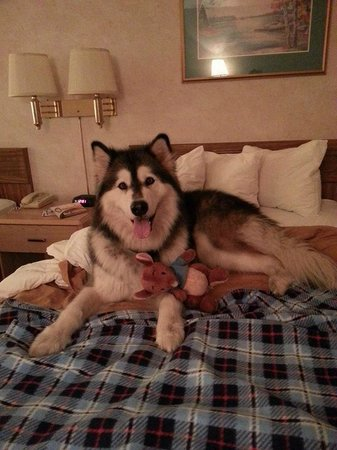 Quality Inn By the Bay: Lakota felt SO comfortable in her bed!