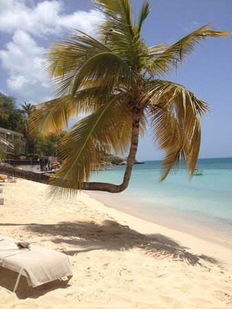 Blue Waters Antigua: Famous Hugo Palm tree