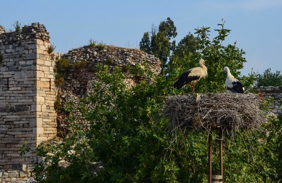 Hotel Bella: Views of the storks and St. John's Basilica from the restaurant