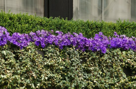 Lancaster Hall Hotel: Flowers outside