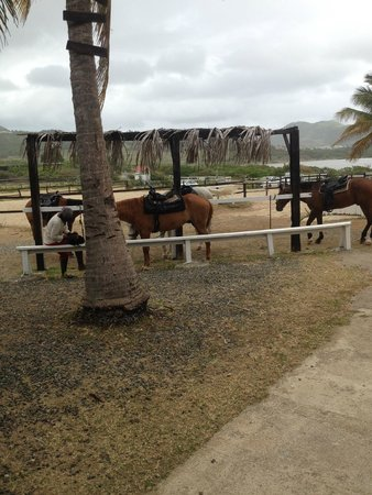 Bayside Riding Club Ranch