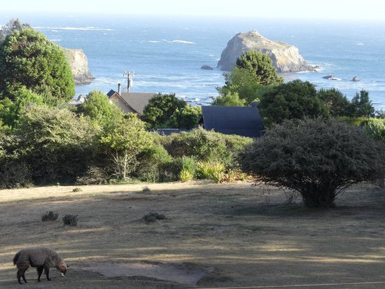 Glendeven Inn Mendocino: View from Bayview room; ocean & llama!