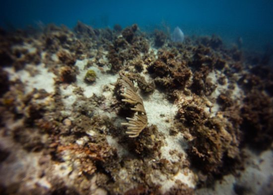 Marine Life Divers: Samsara Cliff