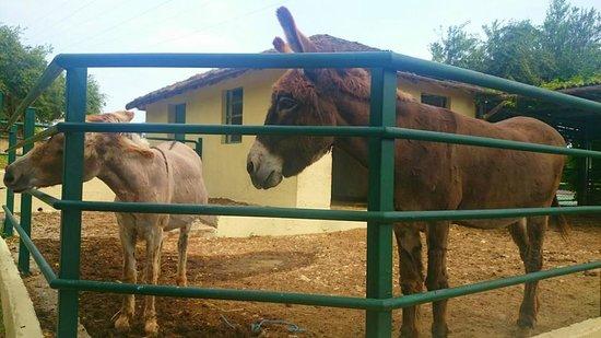 Imperial Belvedere : Donkeys