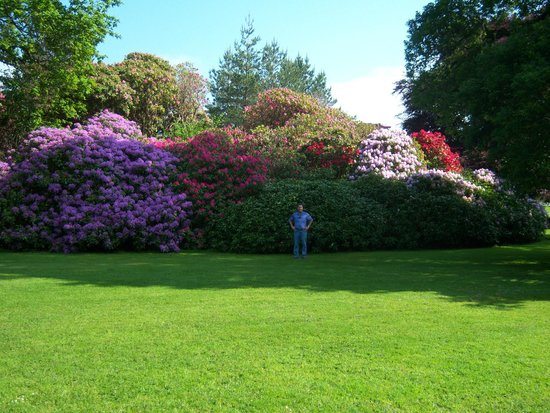 Muckross House, Gardens & Traditional Farms : huge plants blooming