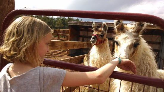 Triple B Ranch: Petting Zoo