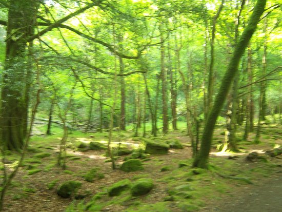 Torc Waterfall: so green