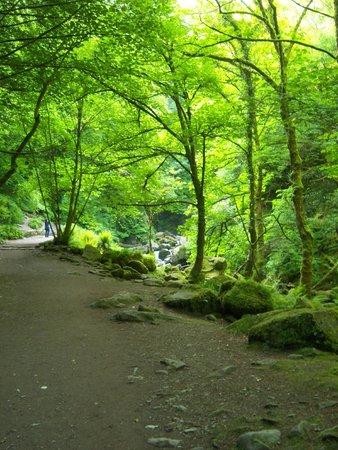 Torc Waterfall: walk to the falls