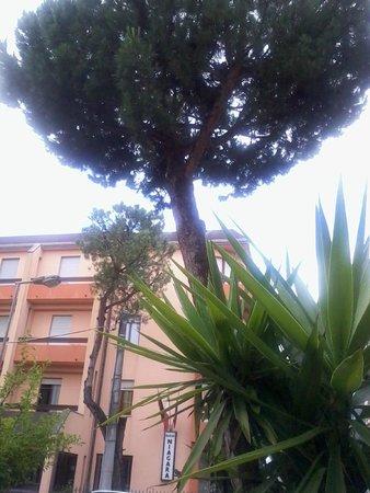 Hotel Ausonia: Около отеля растет хвойное деревце
