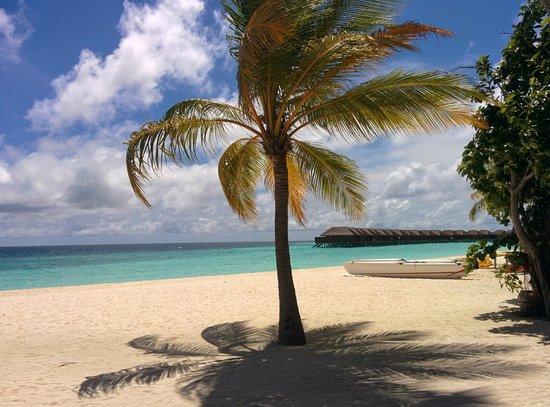 Veligandu Island Resort & Spa : Veligandu
