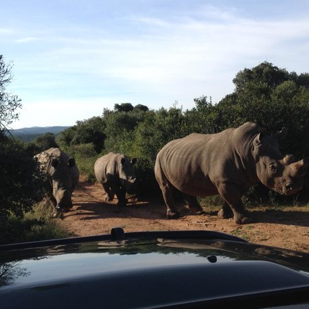 Kariega River Lodge : family of Rhino