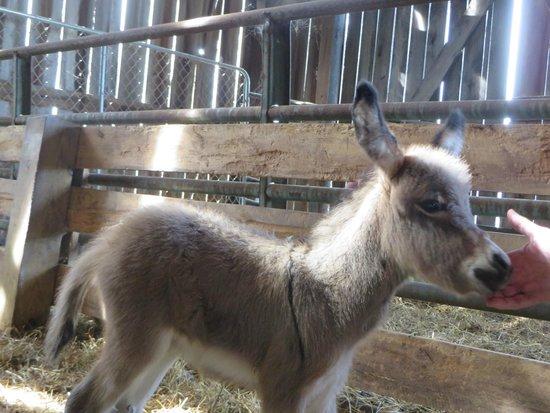 The Farm LLC : New baby donkey