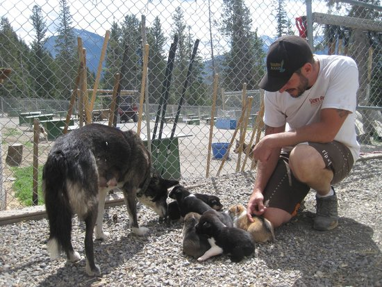 Snowy Owl Sled Dog Tours: Ethan with Lighting and her six 3-week old pups: Bandit,Menace, Outlaw, Rascal, Rebel and Renega