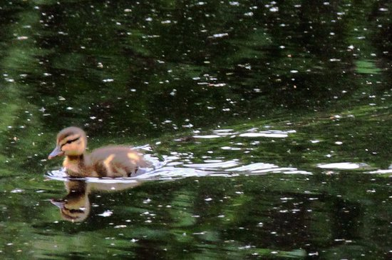 Pearson's Pond Luxury Inn and Adventure Spa: A New Duckling on the Pond