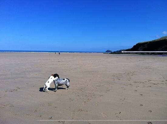 Perranporth Beach: Roxy and Lucie taking 'another' stroll on the sands. Has to be on a dog walkers Bucket List!