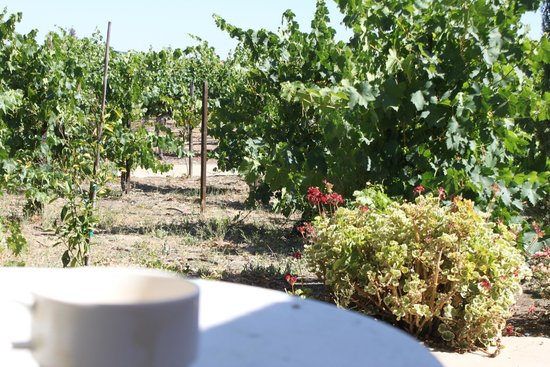South Coast Winery Resort & Spa: The vineyard right of the patio of our Villa